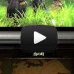 15 minutos de Fire Emblem Awakening