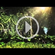 Vamos a ver gameplay de Assassin's Creed IV: Black Flag