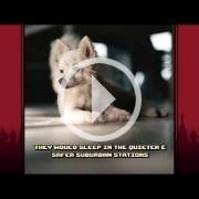 Russian Subway Dogs estará disponible el 2 de agosto