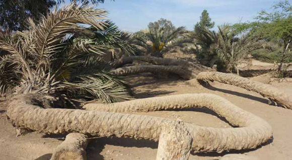 1000 Heads Among the Trees: brujería y misterio en el desierto peruano